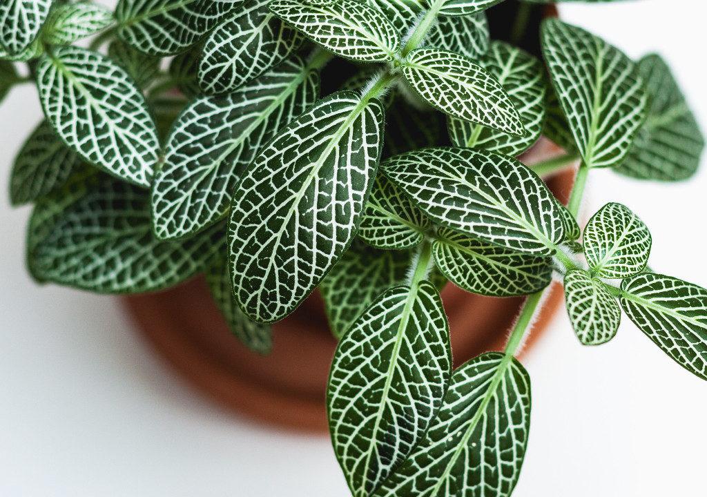 Plante en pot © Dan Gold / Unsplash