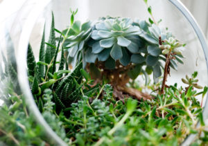 Terrarium © Jeff Sheldon / Unsplash