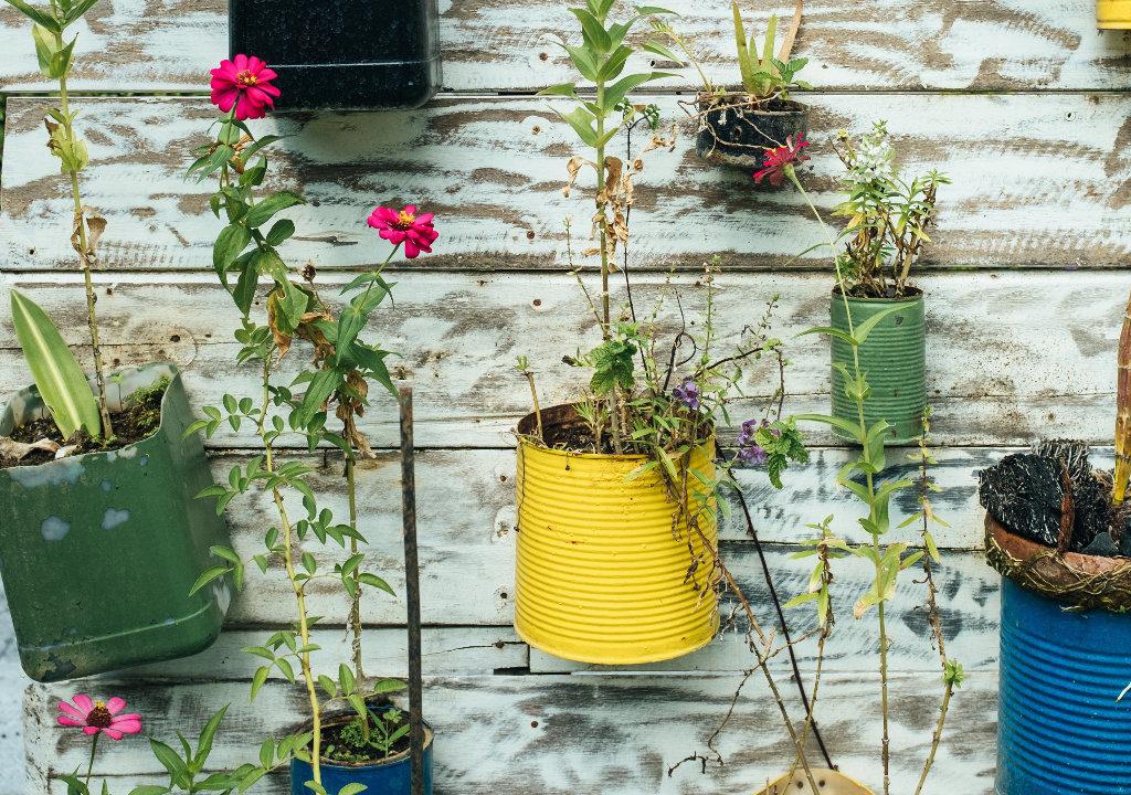 Plantes et boîtes de conserve / Bernard Hermant / Unsplash