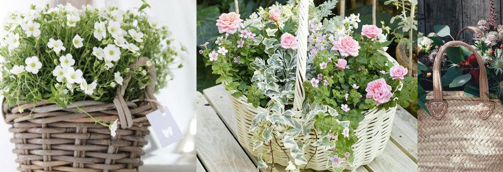 Exemples de paniers avec plantes