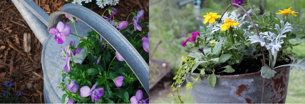 Seaux avec plantes