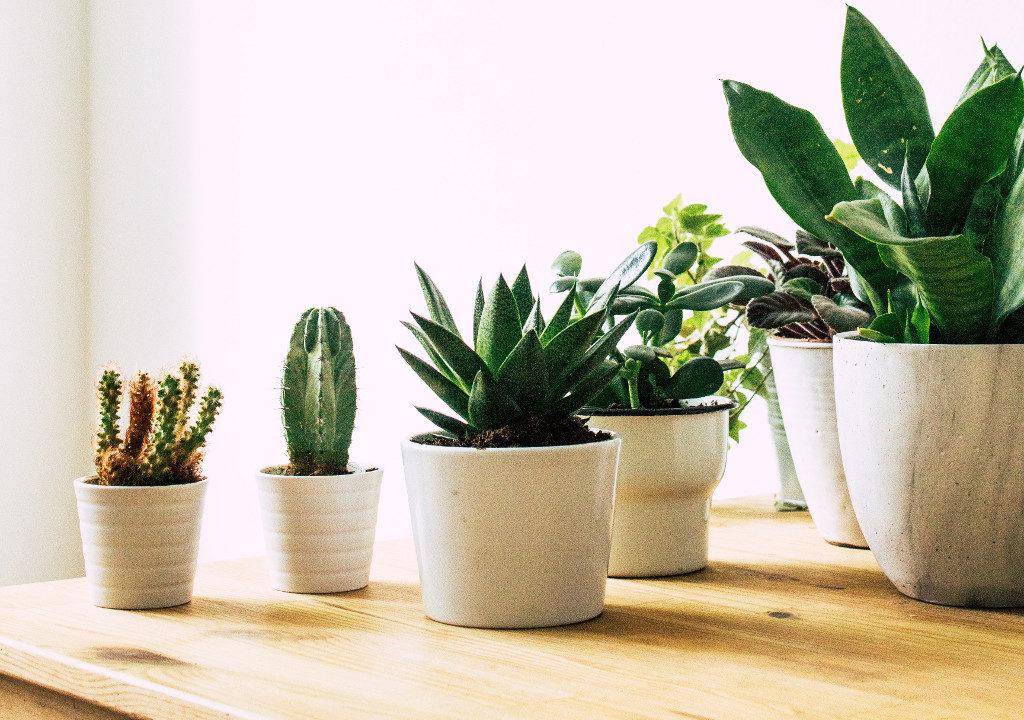 Petites plantes en pot / Margarita Terekhova